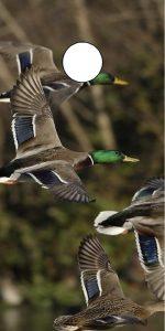 Duck Hunting Cornhole Board Decal Wrap